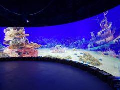 """把整座海都搬给你!""""深蓝之境""""海洋沉浸式体验互动方案"""