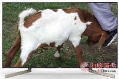 49寸售价5299元索尼KD-49<font color='#FF0000'>X</font>9000F电视值得买吗?